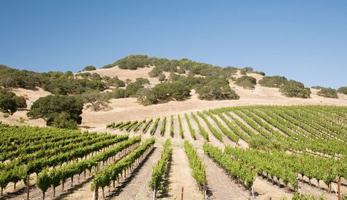 875894_napa-valley-vineyard.jpg