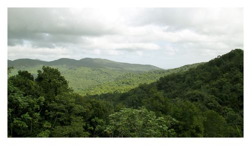 foret tropicale guadeloupe-copie-1