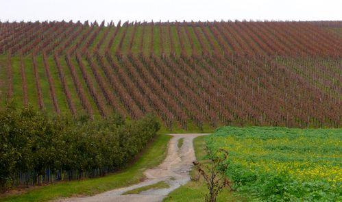 kirchheimvins vignesrecentes