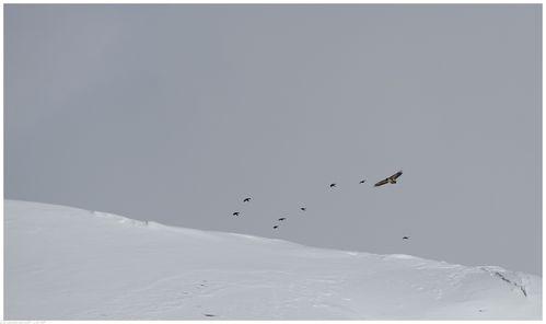 oiseaux-2014 3826