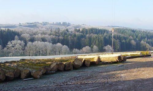02 les arbres abattus
