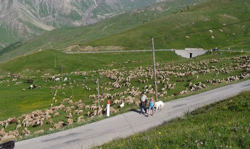 2011-06-29-Col de la Sestrière-3