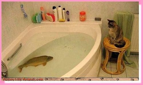 chat poisson bain pf
