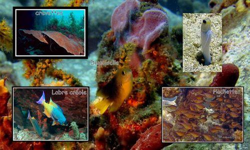 poissons diverses à trier2