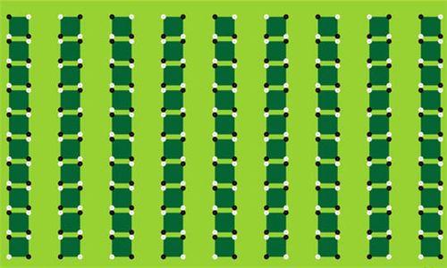 bambous-587840.jpg