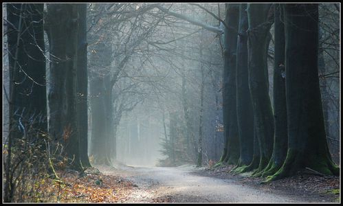 Into_the_February_forest_by_jchanders.jpg