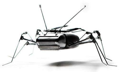 Andrea Petrachi - Insecto