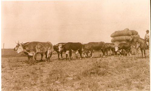 Transport-de-la-laine.jpg