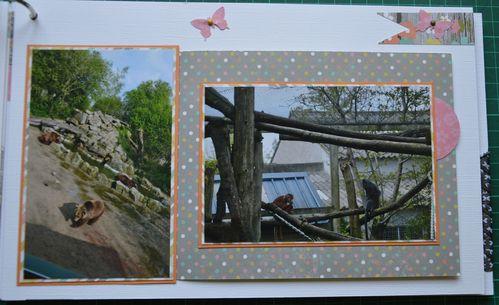 album-visite-au-zoo 0828