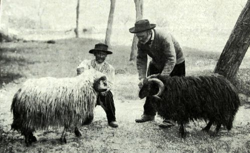 Corse--beliers---RZ-annees-1920-B1.JPG