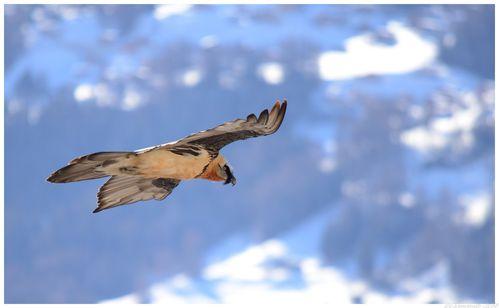 oiseaux-2014 7079 - Copie