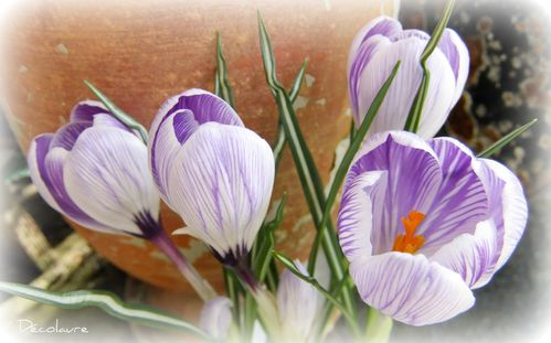 fleur pensée 004 picnik