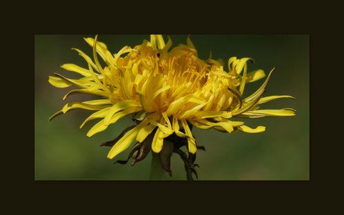 La fleur du moment