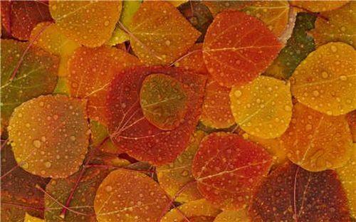 ambiance-d-automne-503506.jpg