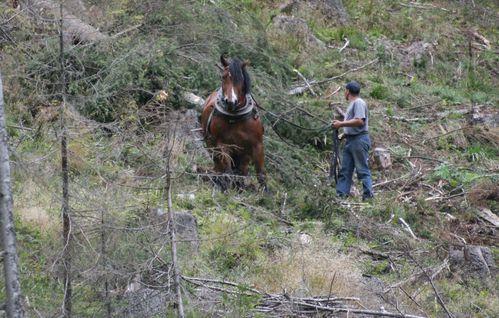 le-cheval-tire-les-troncs.jpg