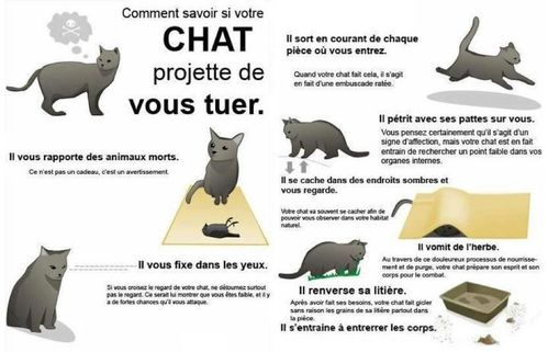 Chat-tueur-lol.jpg