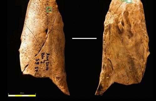 outil-neandertal-grotte-du-Bison-copie-1.jpg