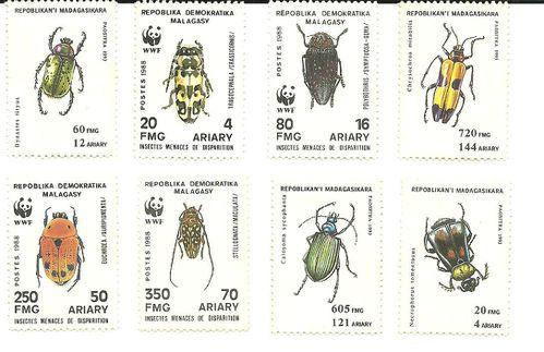 insectes mada