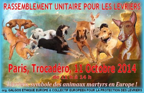 galgos-ethique-europe-collectif-europeen-protection-levrier