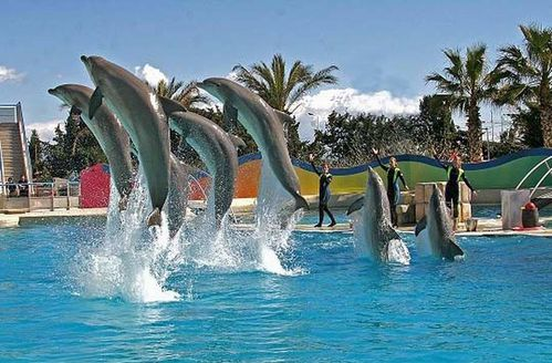 Antibes - spectacle des dauphins