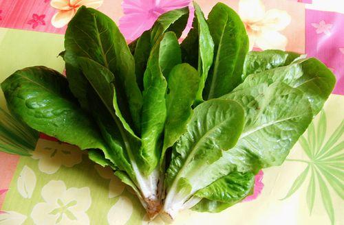 Le petit chicon une vari t de salade ancienne le blog - Variete de salade d hiver ...