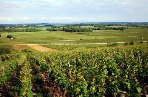 Vignes-Bourgogne.JPG
