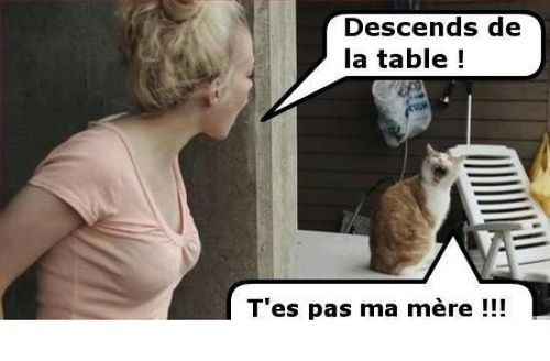 cocasse-chat-table.jpg