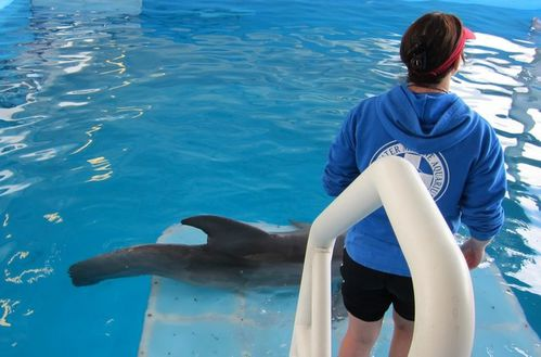 Dolphin tale (9)