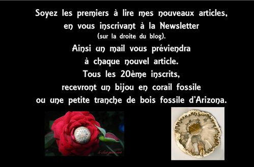 texte newsletter copie
