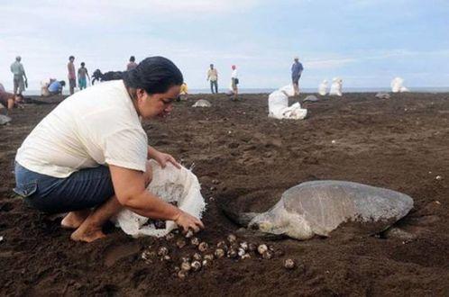costarica-2-tortues-de-mer