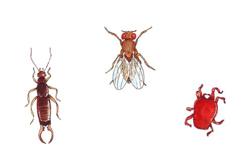 insectes - planche3