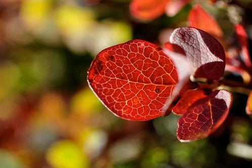 automne-2012 0673b