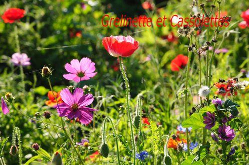 Fleurs_T.jpg