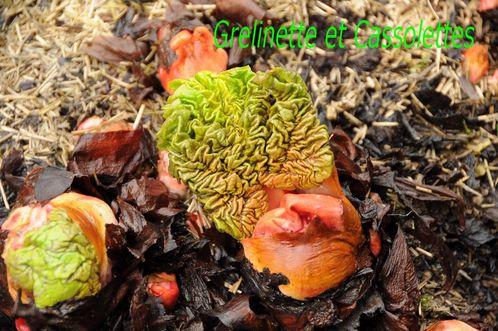 RhubarbeT-copie-1.jpg