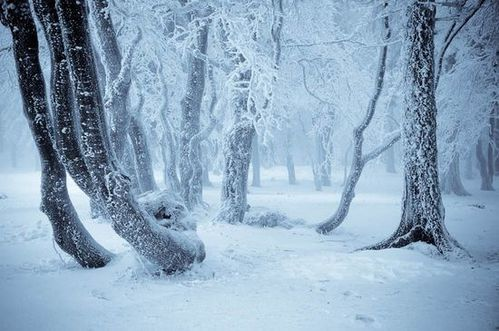 paysage-hiver-521