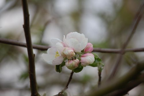 622 - fleurs 2