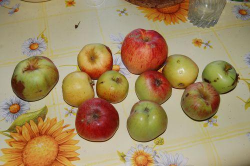 599 recolte de pommes