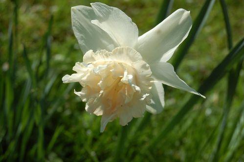 160 - fleurs au jardin 10