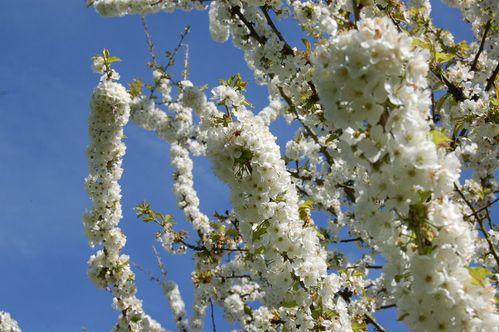 160 - fleurs au jardin 13