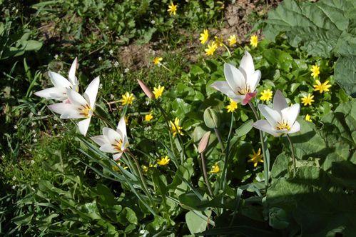 160 - fleurs au jardin 2