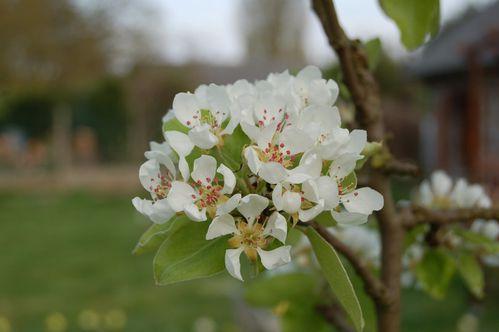170 - fleurs dde printemps 1