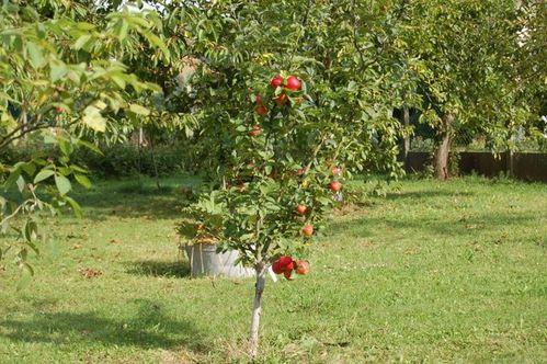Nature-et-jardin-24 1113
