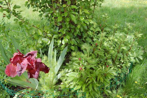 Nature-et-jardin-25 0182