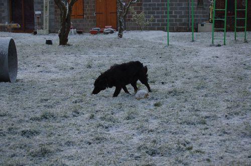 739 neige surprise 6