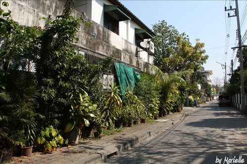 Dozy House - Chiang Mai by Marielle
