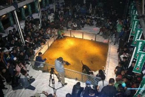 heineken-dog-fight-picture.jpg