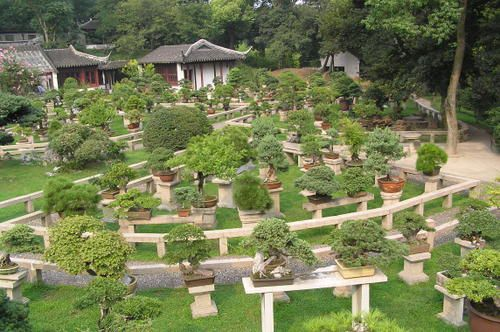 Bonsai-forest-at-the-gardens-of-pagoda-Yunyan-Ta.jpg