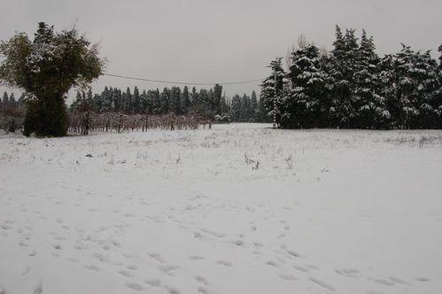 neige2010-03