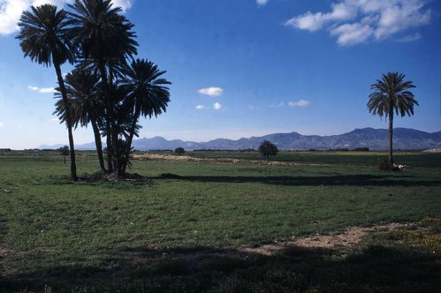 Angastina-paysage-palmiers-1998---copie.jpg