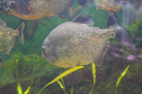 Au pays des poissons de rêve